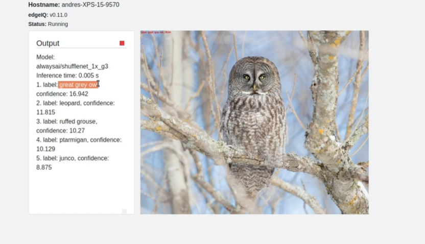 Screenshot of and owl using image Classification